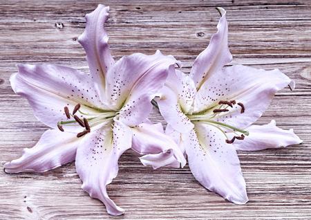 Arreglo Lilium color Violeta