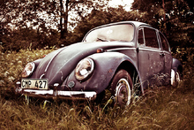 Beetle High Dynamic Range